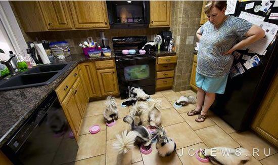 Семейная пара содержит дома 14 скунсов